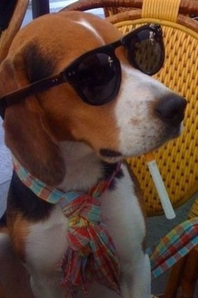 My beagle is the coolest dog on earth