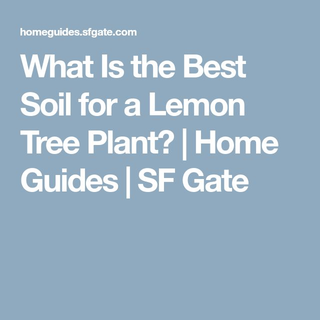 What Is the Best Soil for a Lemon Tree Plant? | Home Guides | SF Gate