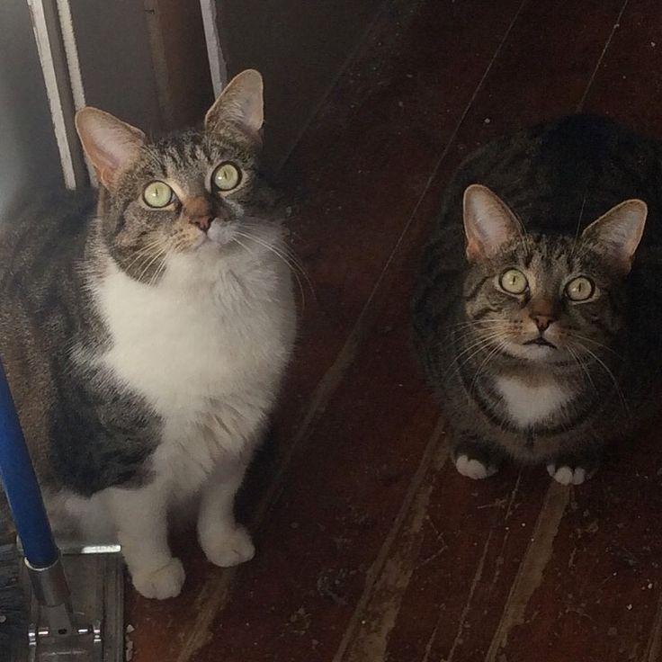 Siblings Jasmine & Soxie 💚