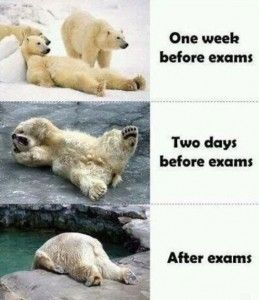 Final Exam Meme