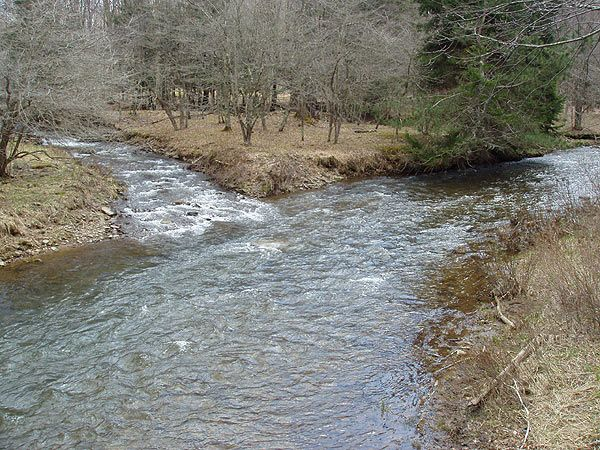 48 best images about wv oh md and pa trout streams on for Stocked trout fishing