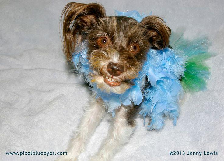 31 best {Dog Photo Contest} Pawty Animal images on Pinterest | Dog ...