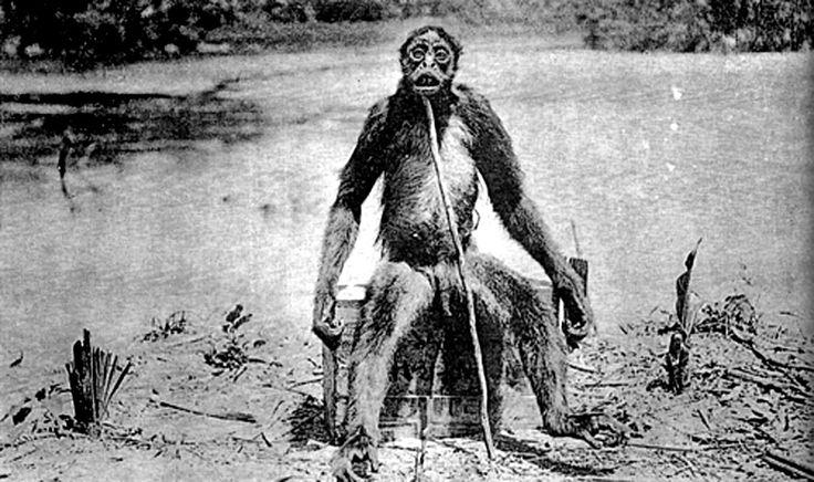 """""""El simio de Deloise"""" de la Amazonia colombiana- esta es la hembra de una pareja que atacó al expedicionario.   http://radioactivity-mistery.blogspot.com.ar/2012/03/el-simio-de-deloise.html"""