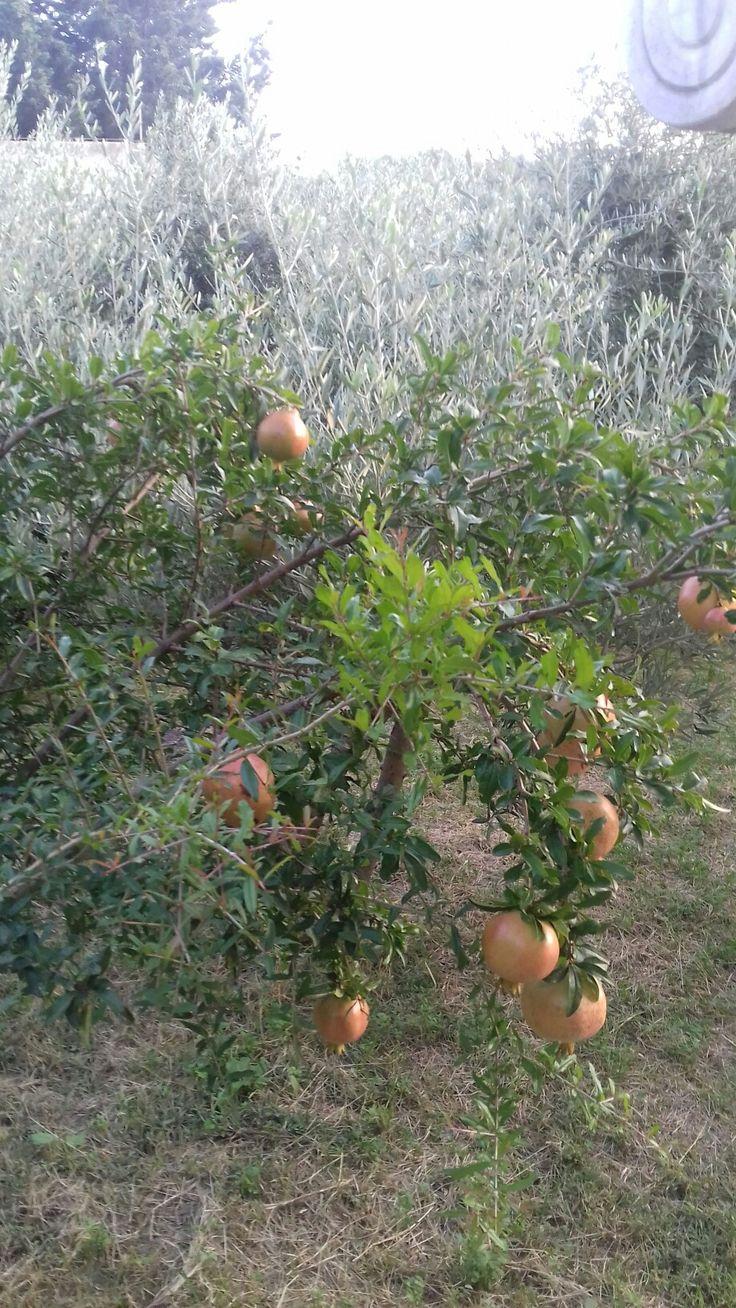 Plantation pommier ariane dating