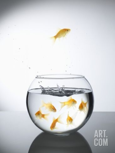 Goldfish jumping out of a bowl and escaping from the crowd Photographic Print by Steve Lupton at Art.com