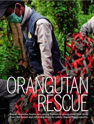 Saving orangutans | Discover Wildlife