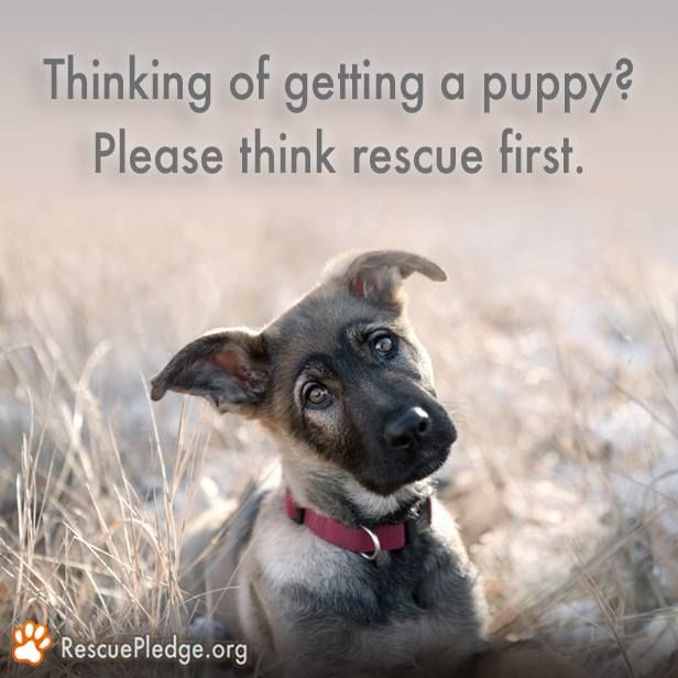 """""""Thinking of getting a puppy? Please think rescue first."""" With so many animals waiting to be adopted, it's worth it to give one of these sweet pets a forever home. --- Stop by the Humane Society of Fremont County in Canon City, CO, to see all of our adoptable animals! http://www.canoncityhumanesociety.org/"""