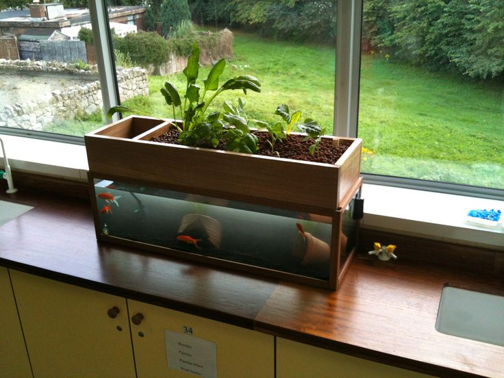 Nice little desktop aquaponics system using a fish tank. #aquaponics #fishtank #aquarium