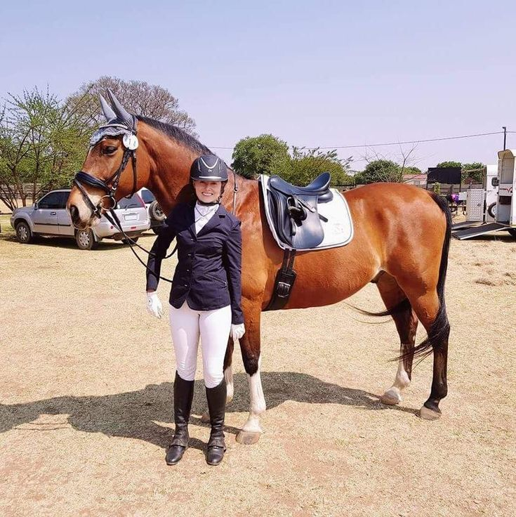 Dressage horse! Novas Equestrian numnah, ear veil and bridle! #englishtack