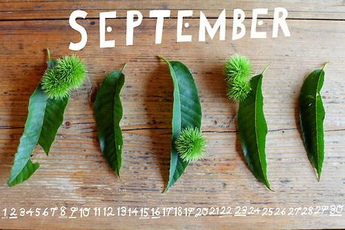 flower calendars by the month for your desktop!