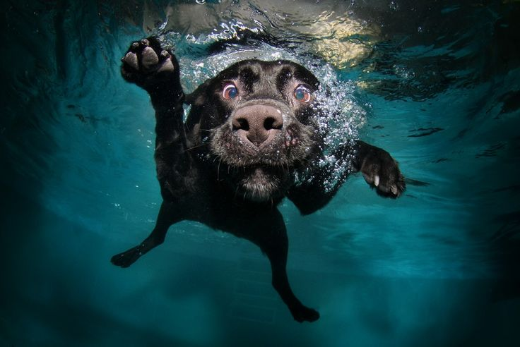 Diving Dog Pictures...