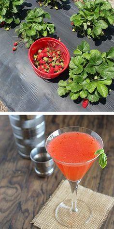 strawberry martini images