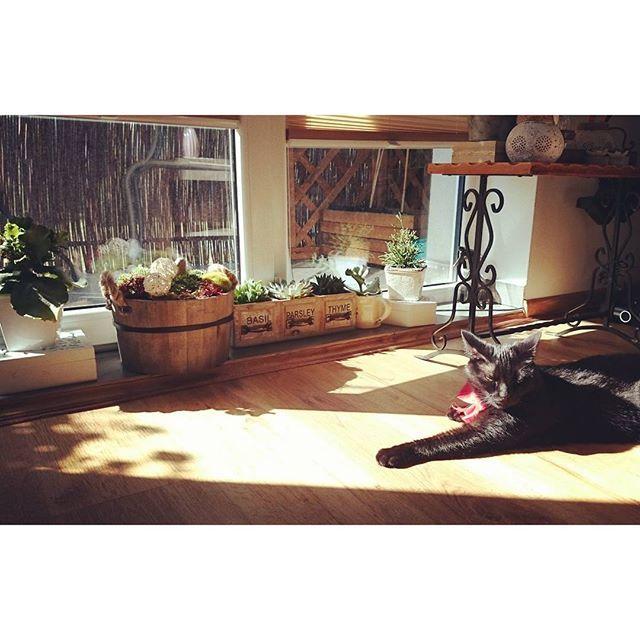 Sobotni koci chillout w październikowym słońcu ❤😻❤😻 #relax #chillout #mycat #october #weekend