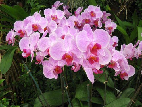 Toujours splendide lors de son achat, une orchidée défleurie perd souvent de son intérêt et peu malheureusement finir à la poubelle pour cause de soins...