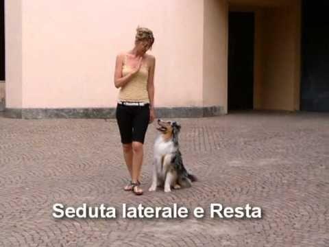 Addestramento del cane Italian Edition