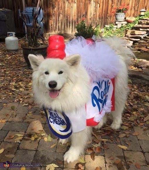 Whipped Cream Dog Costume   Halloween costumes, Halloween ...