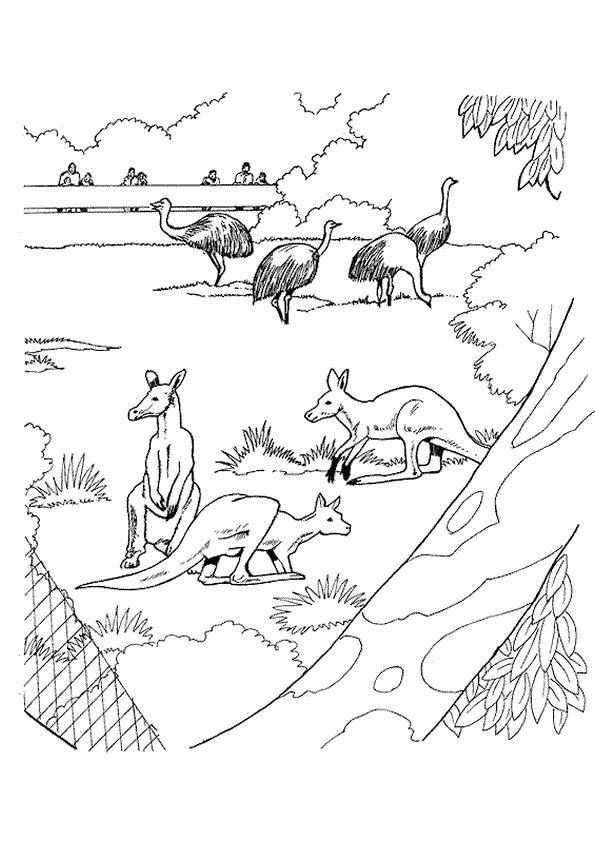 A colorier, des kangourous et des autruches dans un zoo