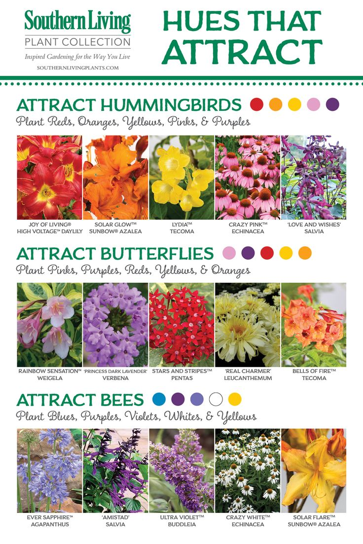 attracting pollinators to the garden - Flower Garden Ideas Illinois