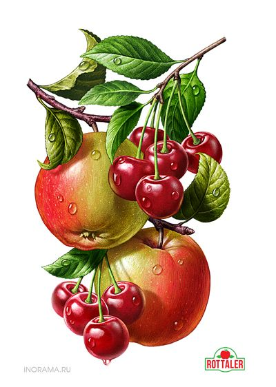 Иллюстрации для линейки соков ROTTALER.  by INORAMA illustrators, via Behance
