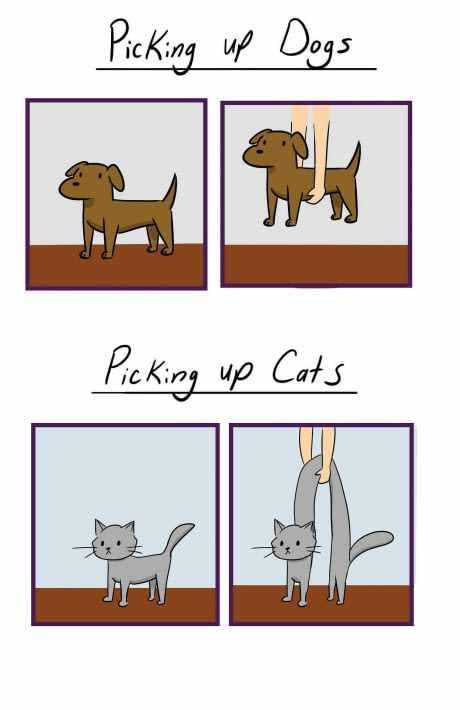 Picking up dogs vs picking up cats