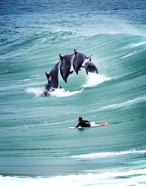 Faire du surf avec les dauphins