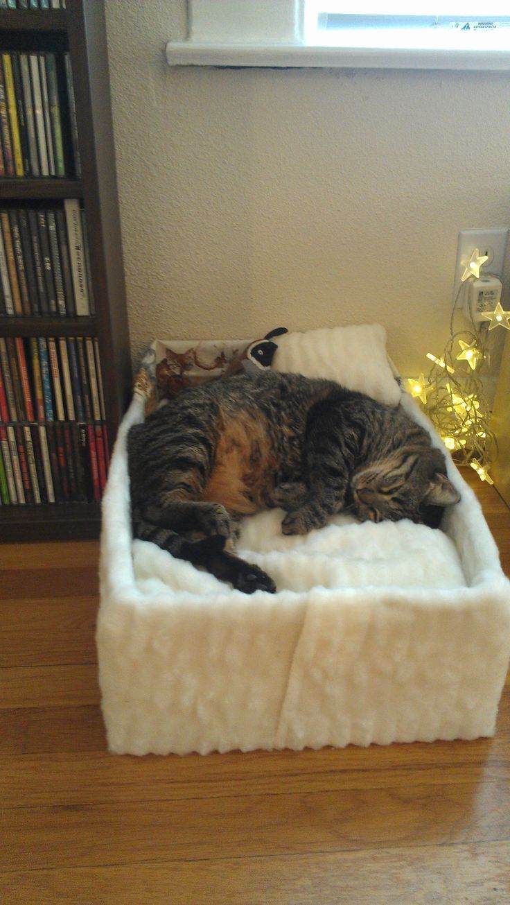 how to acclimate a cat to a new home