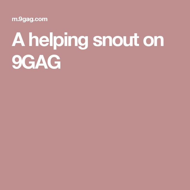 A helping snout on 9GAG