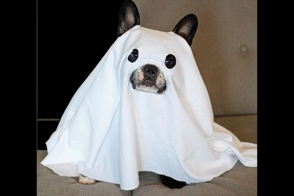 Can Dogs See Ghosts?  Anyone who has ever lived with a dog knows dogs have sensibilities far more acute than our own.