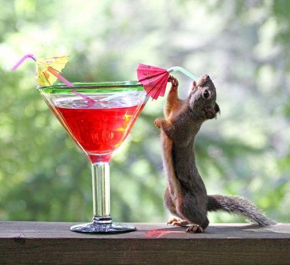 Pink Squirrel Martini: ¾ oz. Crème de Noyaux,  ¾ oz. (white) Crème de Cacao, ½ oz. Stoli vodka, & 1 oz. fresh cream. Pour all over ice in mixing glass. Stir & serve in martini glass.