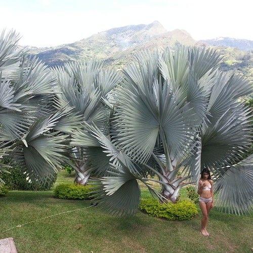 The ss2015 photo shoot in Colombian paradise. #clointimo #paradise #colombia #lenceria