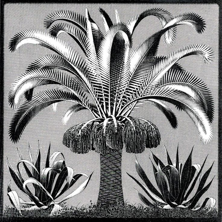 palm by mc escher 1933 wood engraving made from two. Black Bedroom Furniture Sets. Home Design Ideas