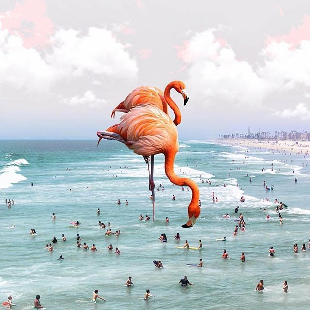 The height of the flamingos is so AWESOME! They are a playful addition to the beach side image