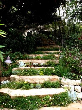 Stone Steps with Succulents