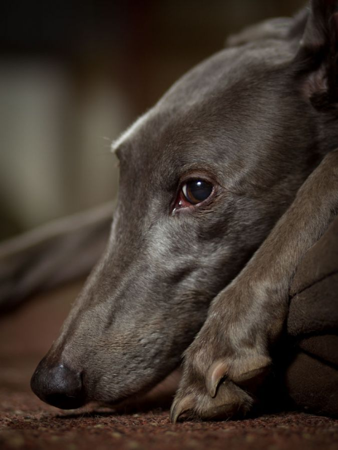 1000+ images about Doggies... on Pinterest | Beautiful ...