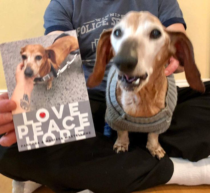 """398 Likes, 15 Comments - Oscar And Friends (@oscarpennyandreid) on Instagram: """"More happy mail!!! 😊❤️ Thank you @inspirationaldachshund for the beautiful holiday card!!! We just…"""""""