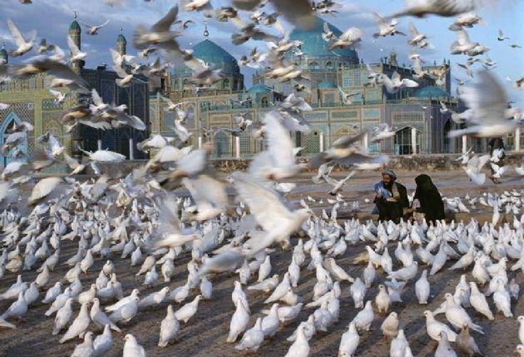 Doves take flight by mytatsuko