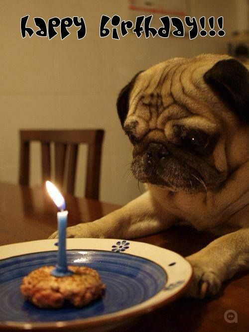 Happy Birthday for dog lovers