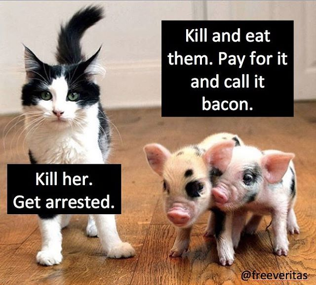 where is the logic? please don't kill or eat animals or pay others to kill for you #vegan #love