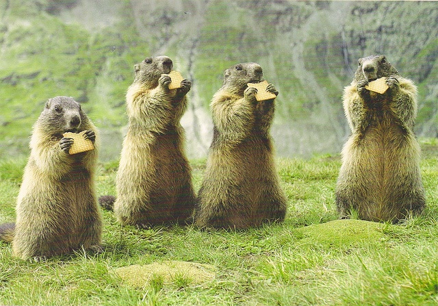 25 best ideas about prairie dogs on pinterest smiling