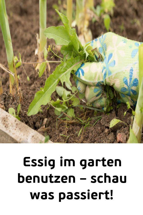 Essig Im Garten Benutzen Schau Was Passiert Tomas Schonheit Gemusegarten Tipps