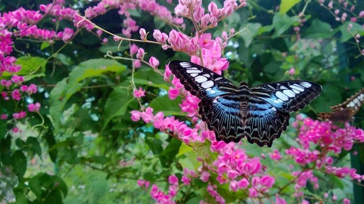Culorile fotografiilor făcute cu Lumia 920