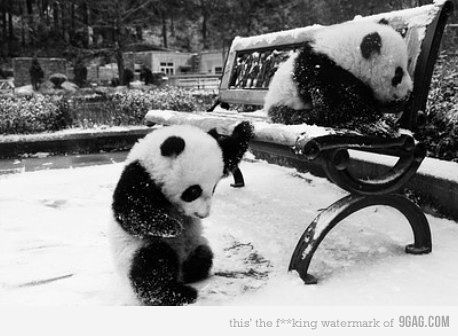 Lil' pandas in the park checking out the snow
