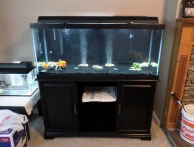Best 25 75 Gallon Aquarium Ideas On Pinterest 75 Gallon