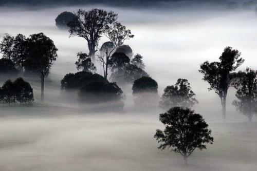 Imbil Island, Australia floats in the Fog before sunrise