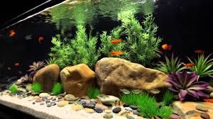 AQUARIUM SUPPLIES, ACCESSORIES AND EQUIPMENT: How to Choose Best Freshwater Aquarium Design