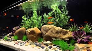 AQUARIUM SUPPLIES, ACCESSORIES AND EQUIPMENT: How to Choose Best Freshwater Aquarium Design