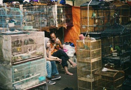 Gerry Newan: aktivitas pagi hari di salah satu sudut pasar burung dan hewan peliharaan lainnya di kota Malang Jatim