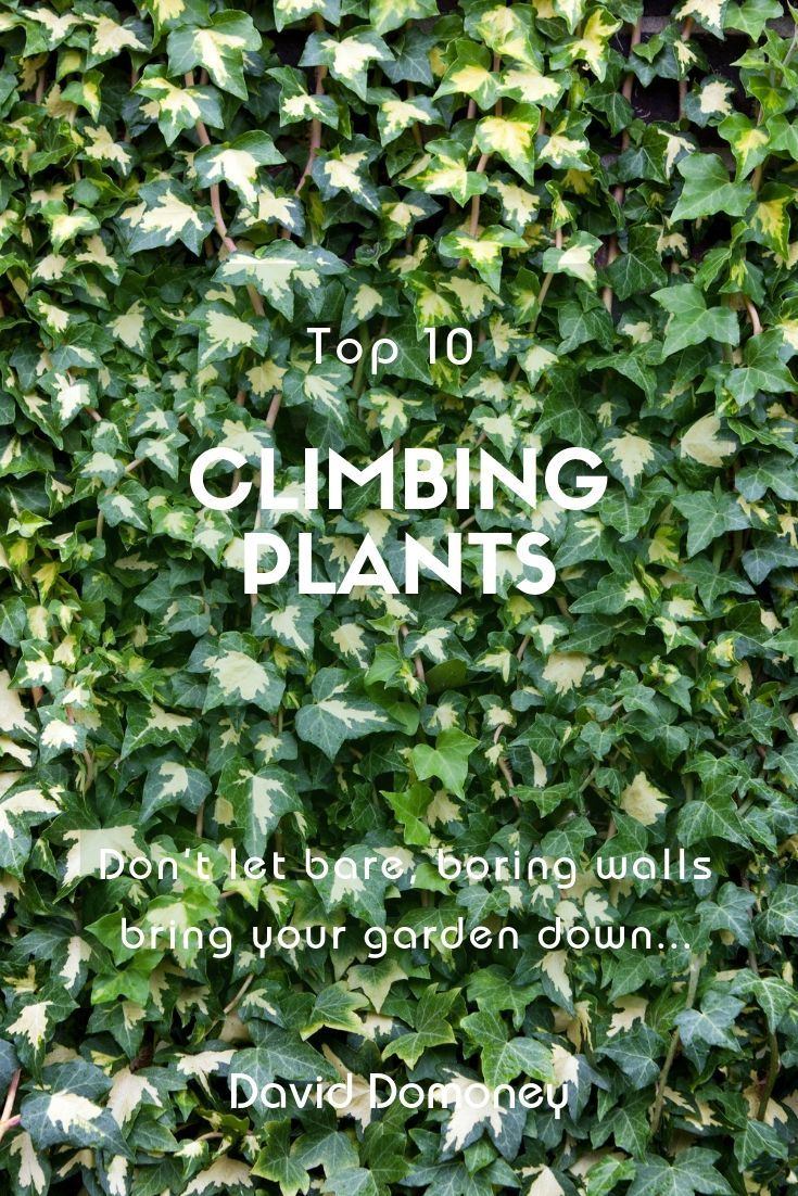 Best 10 Climbing Plants David Domoney Climbing Plants Fence Climbing Plants Trellis Climbing Plants