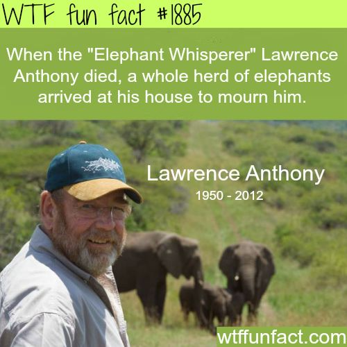 "#1885 - When the ""Elephant Whisperer"" Lawrence Anthony died, a whole herd of elephants arrived at his house to mourn him"