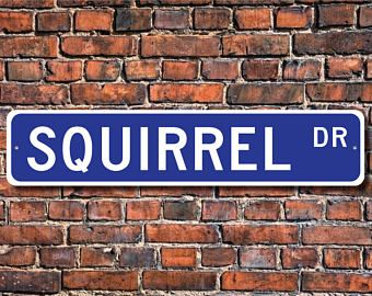 Squirrel, Squirrel Gift, Squirrel Sign, Squirrel decor, Squirrel lover, small or medium rodent, Custom Street Sign, Quality Metal Sign
